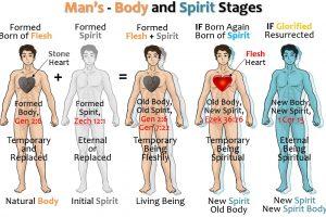 03_MANS - BODY & SPIRIT STAGES
