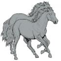 DAPPLE HORSES